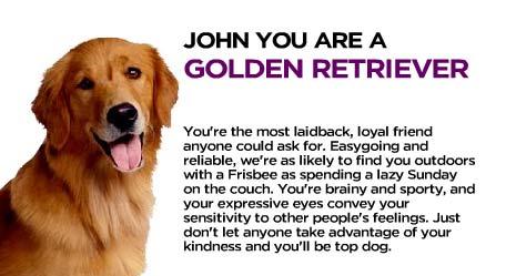 I'm a Golden Retriever
